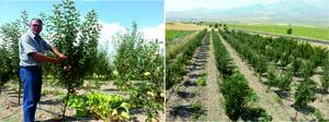 Elma Üreticileri destek bekliyor